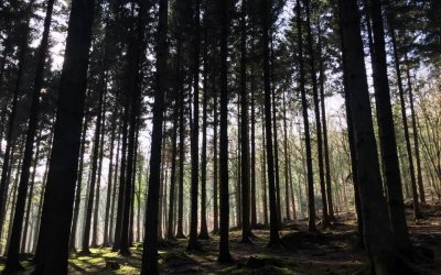 Forest Dances
